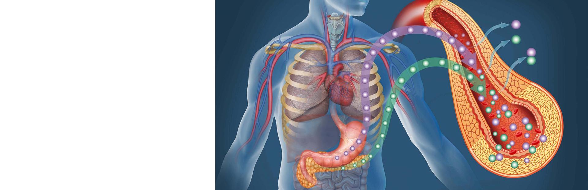 Оценка эндокринной функции поджелудочной железы