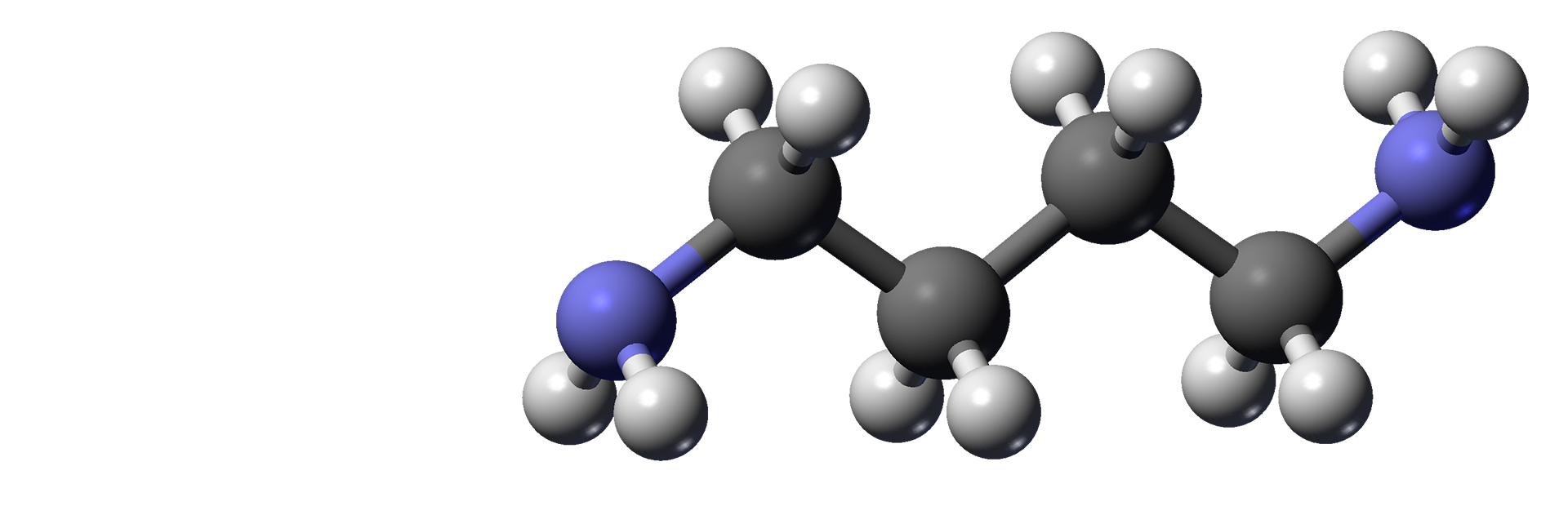 Биогенные амины